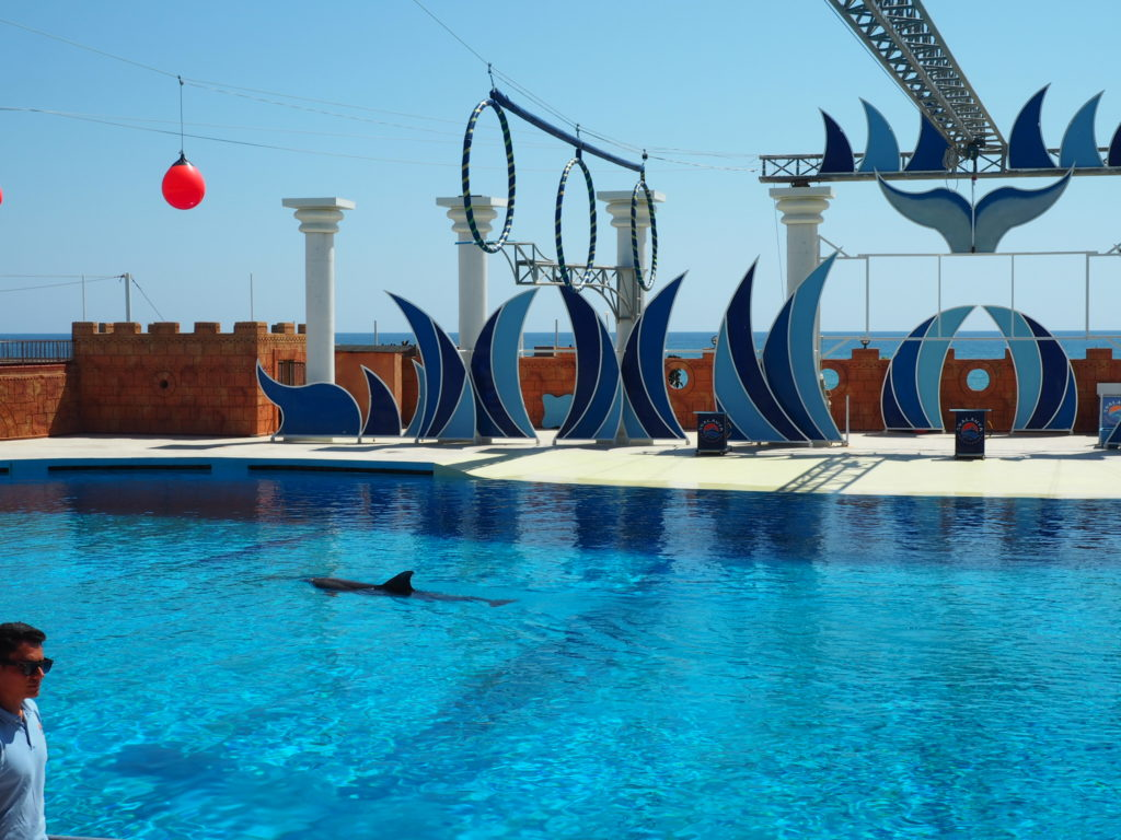 Дельфинарий Sealanya foto 5