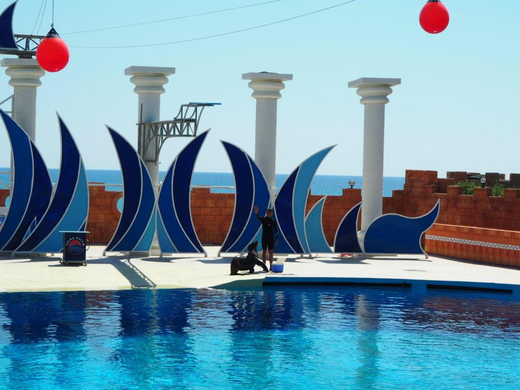 Дельфинарий Sealanya foto 6