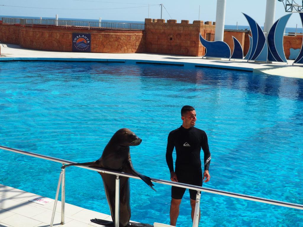 Дельфинарий Sealanya foto 8