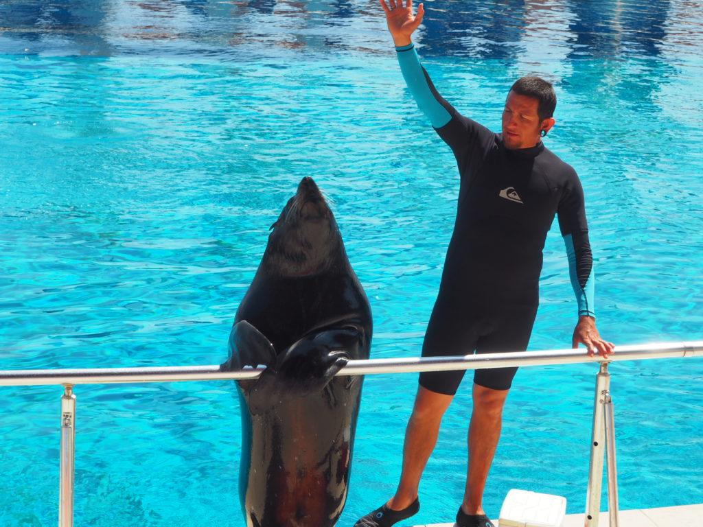 Дельфинарий Sealanya foto 9