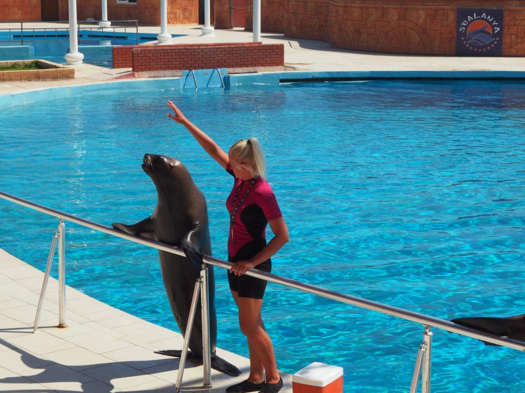 Дельфинарий Sealanya foto 10