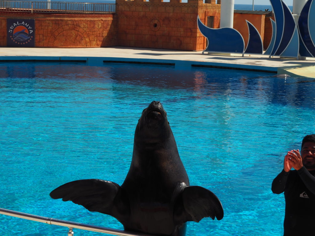 Дельфинарий Sealanya foto 11