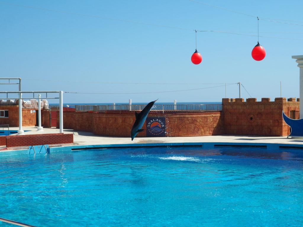 Дельфинарий Sealanya foto 13