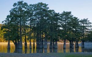 Болотные кипарисы долины Сукко