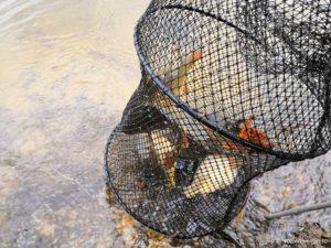 Платная рыбалка в Чернятино