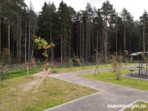 Место для отдыха на трассе М11 на участке от Клина до Твери.