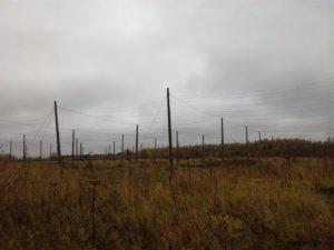 Странные столбы в поле близ деревни Кореньки